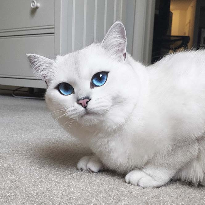 Αυτή η γάτα έχει τα πιο όμορφα μάτια που έχετε δει (11)