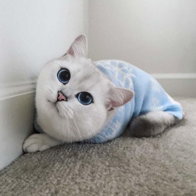 Αυτή η γάτα έχει τα πιο όμορφα μάτια που έχετε δει (12)