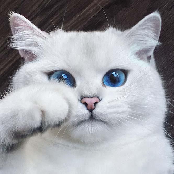 Αυτή η γάτα έχει τα πιο όμορφα μάτια που έχετε δει (13)