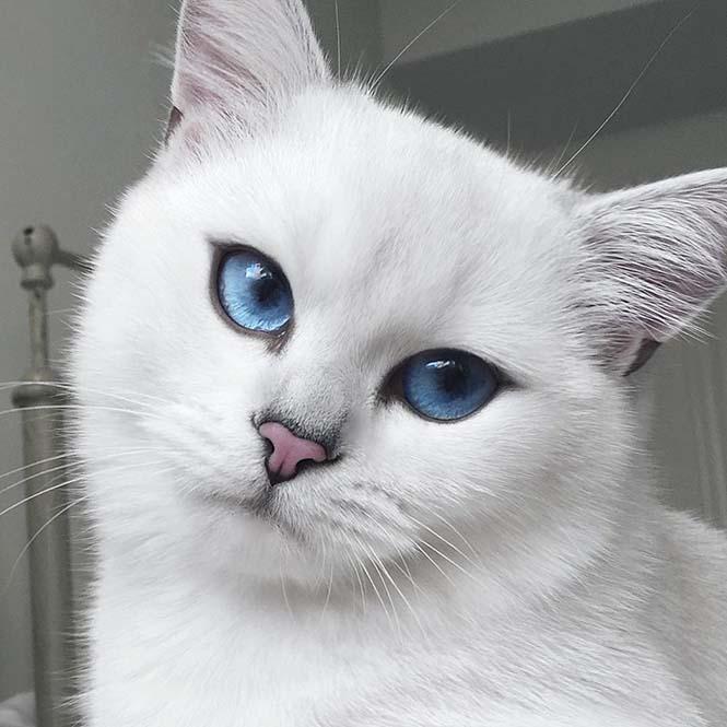 Αυτή η γάτα έχει τα πιο όμορφα μάτια που έχετε δει (14)