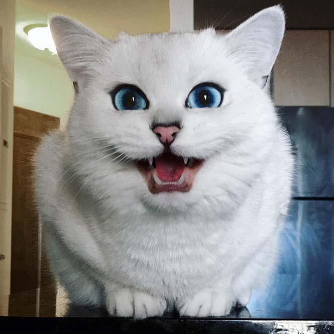 Αυτή η γάτα έχει τα πιο όμορφα μάτια που έχετε δει (15)