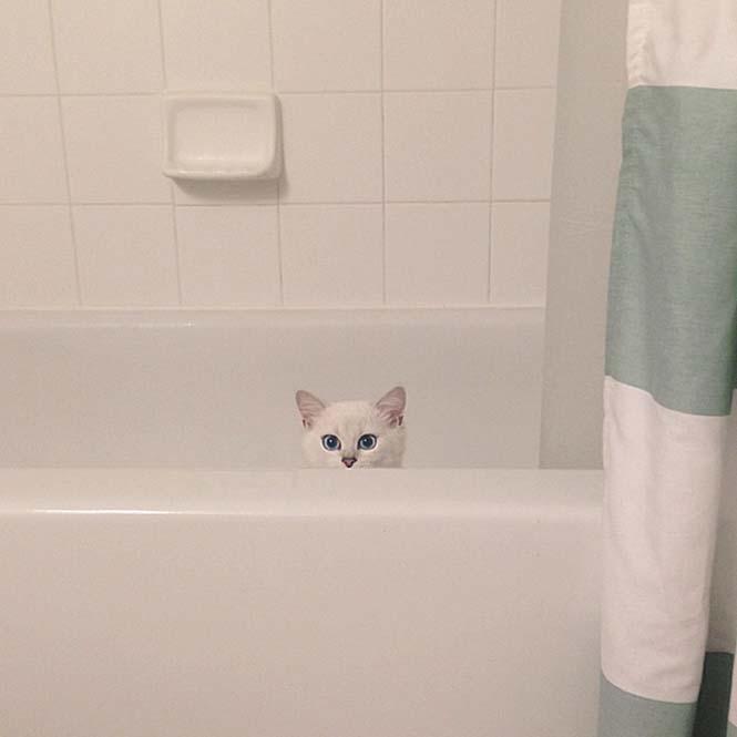 Αυτή η γάτα έχει τα πιο όμορφα μάτια που έχετε δει (16)