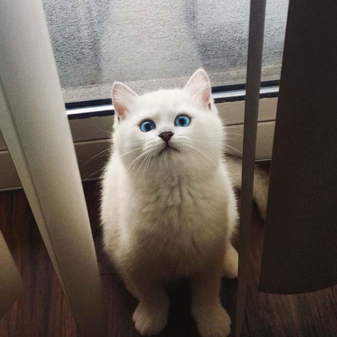 Αυτή η γάτα έχει τα πιο όμορφα μάτια που έχετε δει (17)