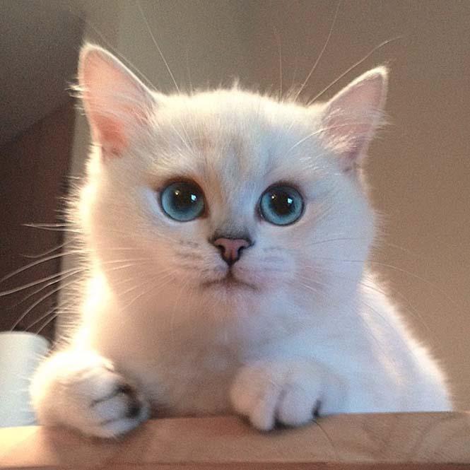 Αυτή η γάτα έχει τα πιο όμορφα μάτια που έχετε δει (18)