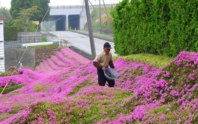 Ηλικιωμένος φύτεψε στον κήπο χιλιάδες λουλούδια για να τα μυρίσει η τυφλή σύζυγος του (1)