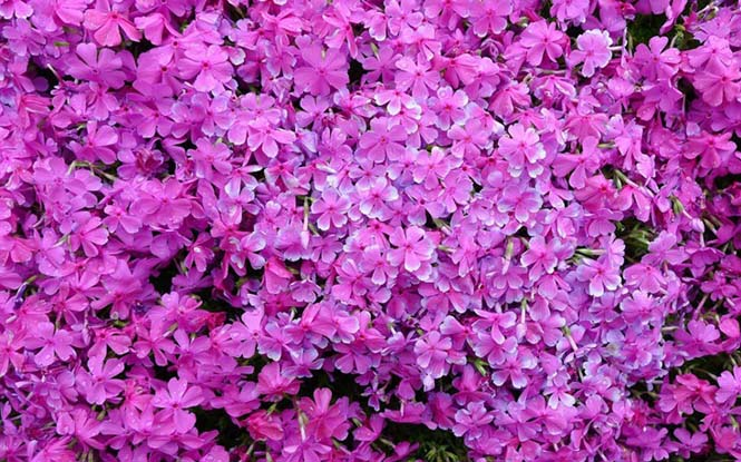 Ηλικιωμένος φύτεψε στον κήπο χιλιάδες λουλούδια για να τα μυρίσει η τυφλή σύζυγος του (3)