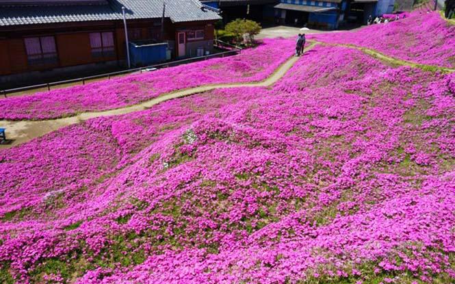 Ηλικιωμένος φύτεψε στον κήπο χιλιάδες λουλούδια για να τα μυρίσει η τυφλή σύζυγος του (4)