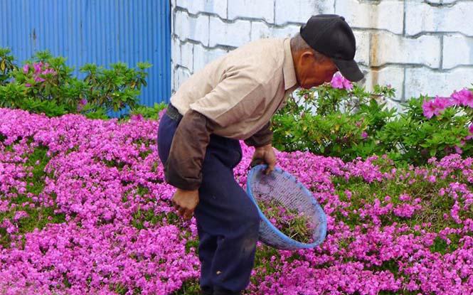 Ηλικιωμένος φύτεψε στον κήπο χιλιάδες λουλούδια για να τα μυρίσει η τυφλή σύζυγος του (5)