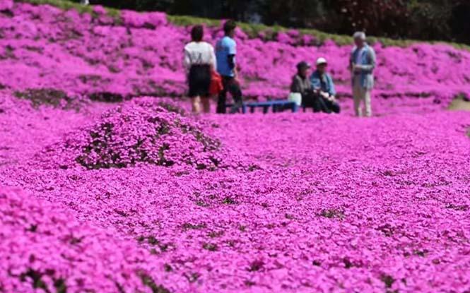 Ηλικιωμένος φύτεψε στον κήπο χιλιάδες λουλούδια για να τα μυρίσει η τυφλή σύζυγος του (6)