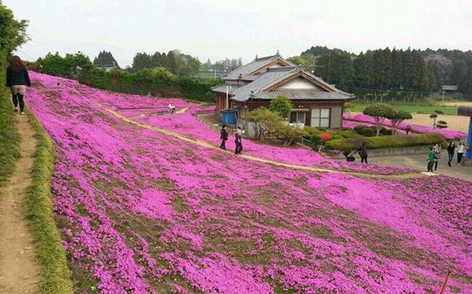 Ηλικιωμένος φύτεψε στον κήπο χιλιάδες λουλούδια για να τα μυρίσει η τυφλή σύζυγος του (7)