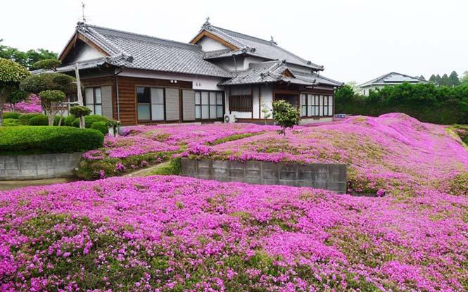 Ηλικιωμένος φύτεψε στον κήπο χιλιάδες λουλούδια για να τα μυρίσει η τυφλή σύζυγος του (8)