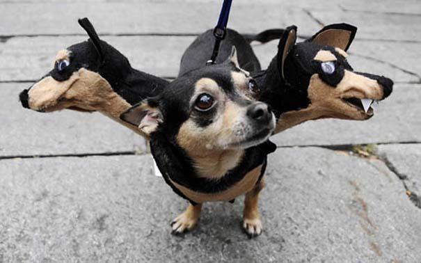 Ξεκαρδιστικές αποκριάτικες μεταμφιέσεις ζώων (2)