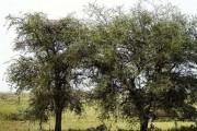 Μπορείτε να εντοπίσετε την κρυμμένη λεοπάρδαλη; (1)