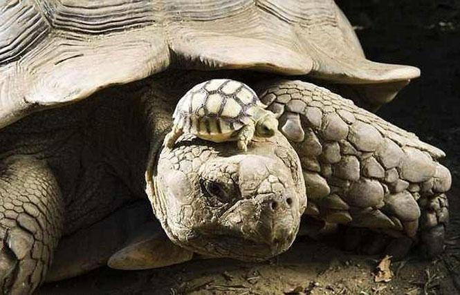 Μητέρα 140 ετών με τον 5 ημερών γιο της | Φωτογραφία της ημέρας