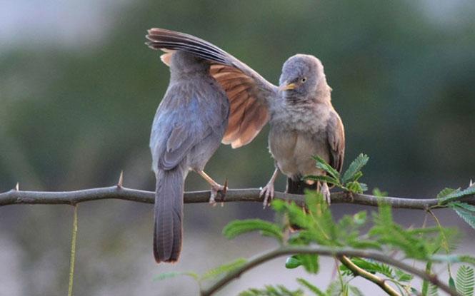 Το πτηνό που... μοιράζει χαστούκια | Φωτογραφία της ημέρας