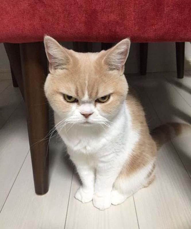Σε αυτή την γάτα δεν τολμάς να φέρεις αντίρρηση (1)