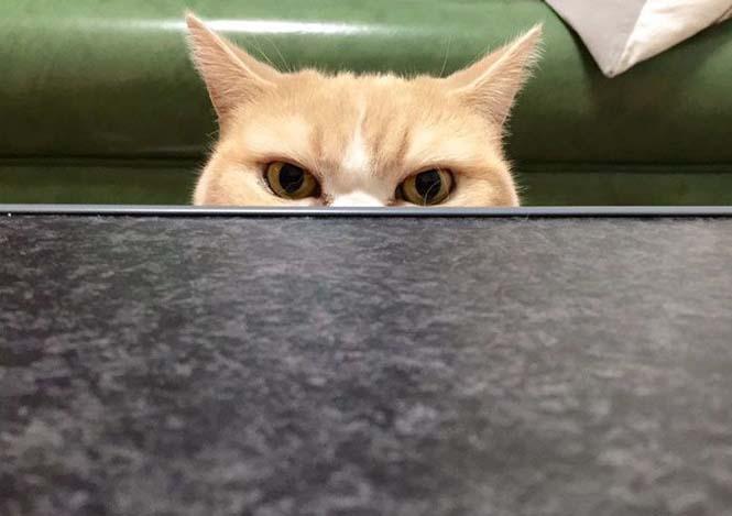 Σε αυτή την γάτα δεν τολμάς να φέρεις αντίρρηση (4)
