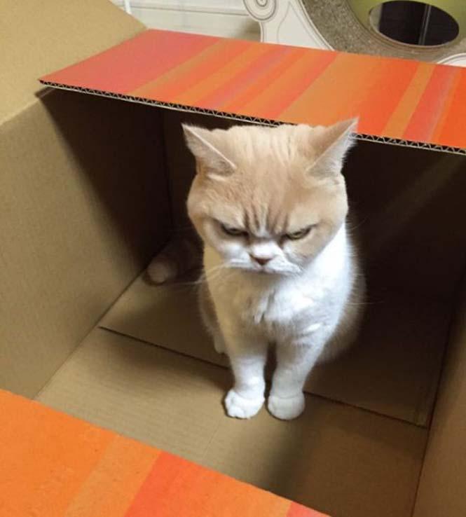 Σε αυτή την γάτα δεν τολμάς να φέρεις αντίρρηση (5)