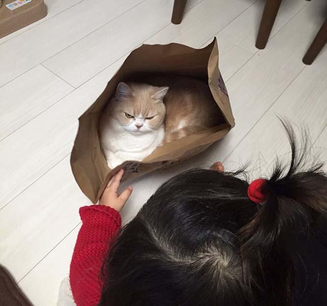 Σε αυτή την γάτα δεν τολμάς να φέρεις αντίρρηση (6)