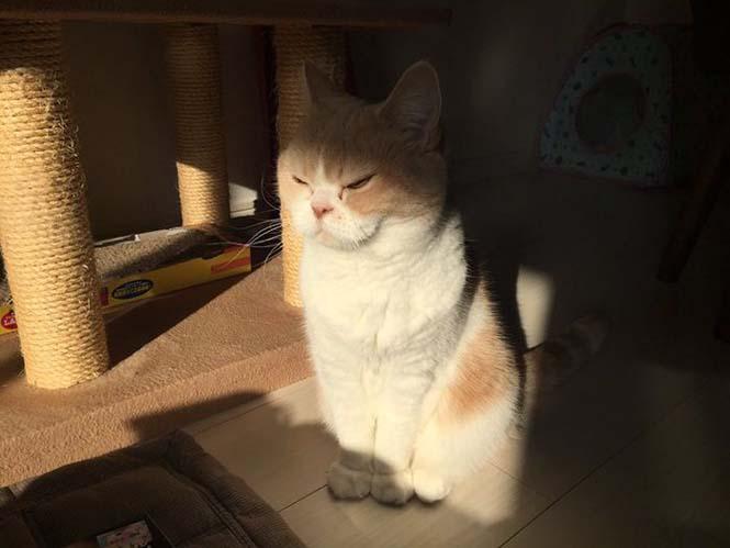Σε αυτή την γάτα δεν τολμάς να φέρεις αντίρρηση (8)
