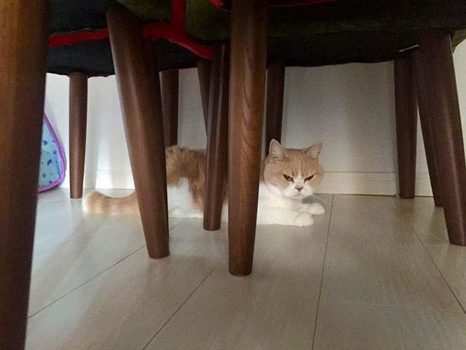 Σε αυτή την γάτα δεν τολμάς να φέρεις αντίρρηση (12)