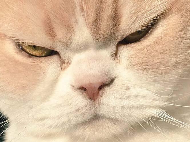 Σε αυτή την γάτα δεν τολμάς να φέρεις αντίρρηση (14)