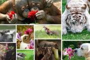 Χαριτωμένα ζώα που μυρίζουν την Άνοιξη (1)
