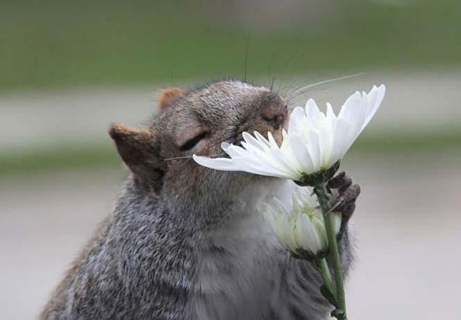Χαριτωμένα ζώα που μυρίζουν την Άνοιξη (2)