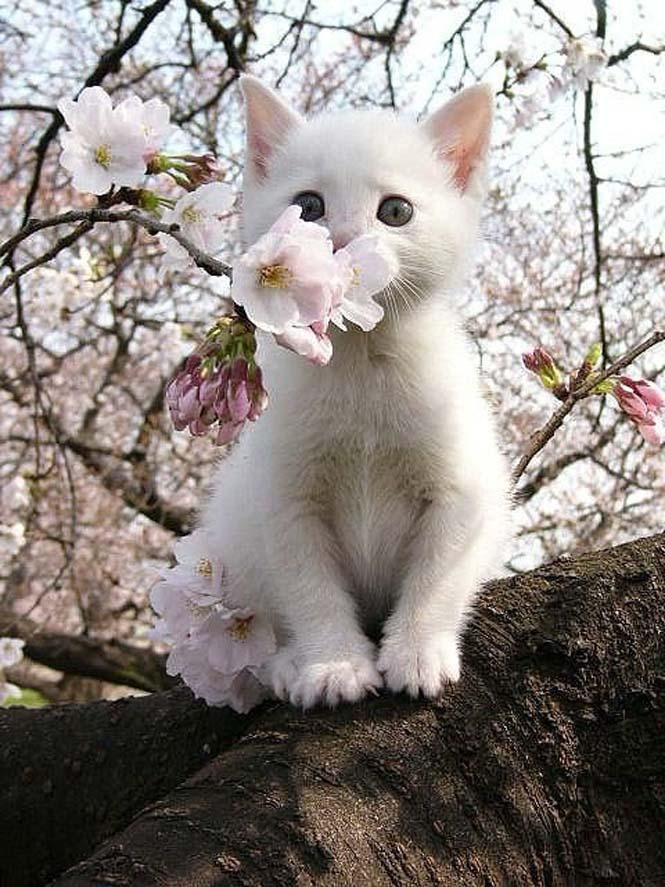 Χαριτωμένα ζώα που μυρίζουν την Άνοιξη (4)