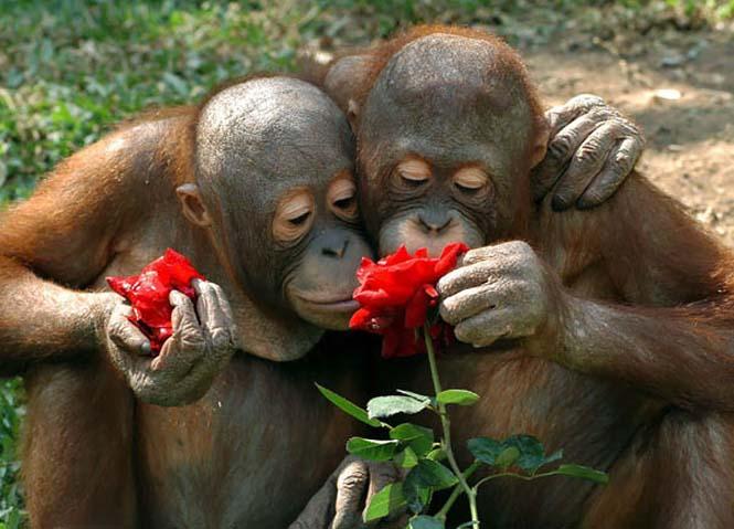Χαριτωμένα ζώα που μυρίζουν την Άνοιξη (5)
