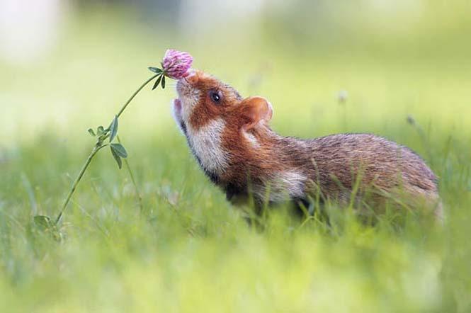 Χαριτωμένα ζώα που μυρίζουν την Άνοιξη (6)
