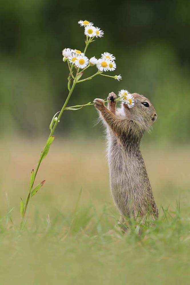 Χαριτωμένα ζώα που μυρίζουν την Άνοιξη (9)