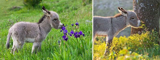 Χαριτωμένα ζώα που μυρίζουν την Άνοιξη (10)