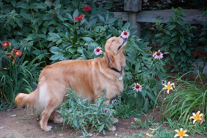 Χαριτωμένα ζώα που μυρίζουν την Άνοιξη (11)