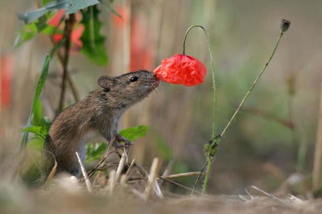 Χαριτωμένα ζώα που μυρίζουν την Άνοιξη (12)
