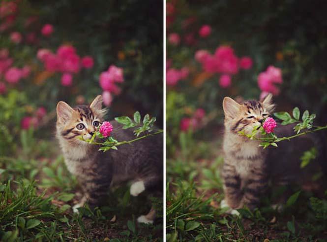 Χαριτωμένα ζώα που μυρίζουν την Άνοιξη (13)