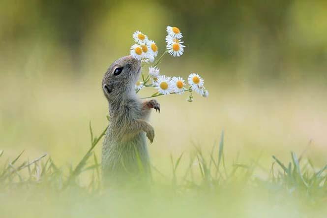 Χαριτωμένα ζώα που μυρίζουν την Άνοιξη (14)