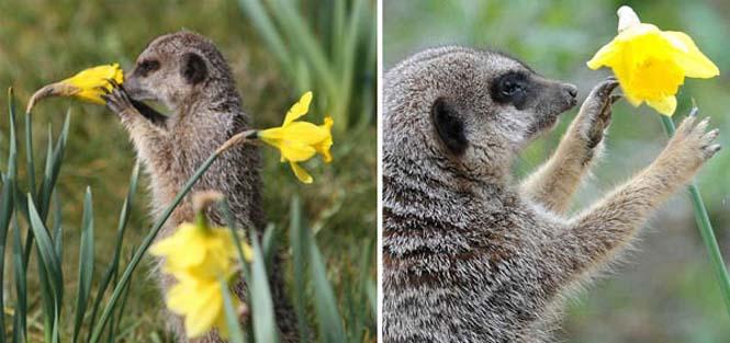 Χαριτωμένα ζώα που μυρίζουν την Άνοιξη (15)