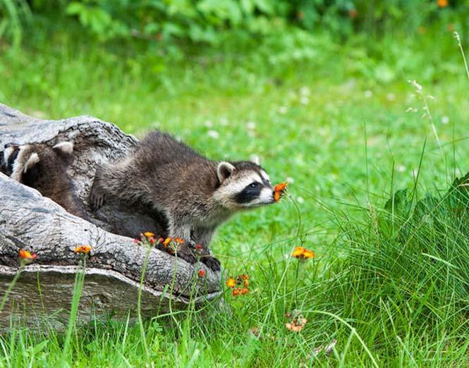 Χαριτωμένα ζώα που μυρίζουν την Άνοιξη (17)