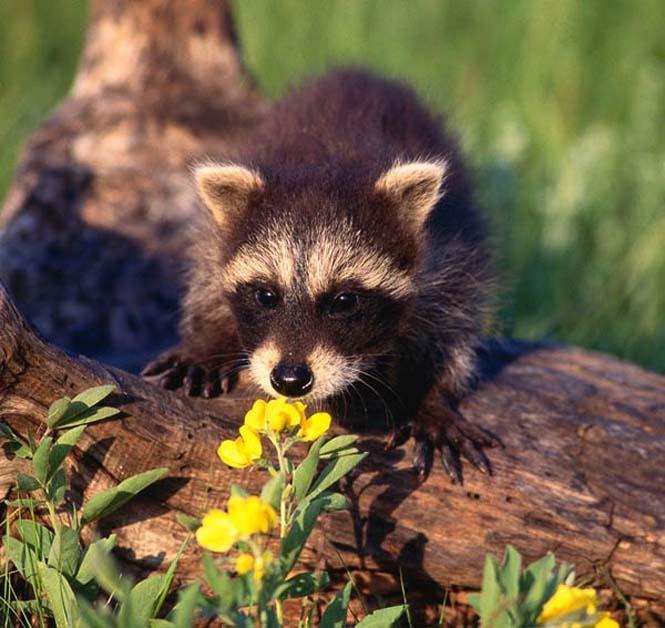 Χαριτωμένα ζώα που μυρίζουν την Άνοιξη (19)