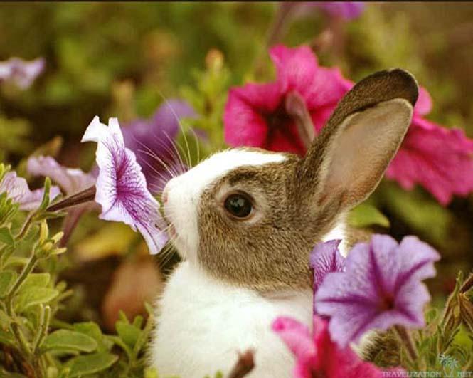Χαριτωμένα ζώα που μυρίζουν την Άνοιξη (20)