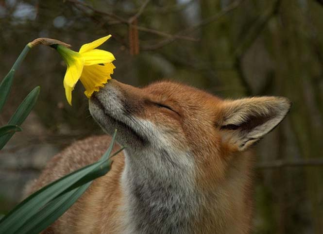 Χαριτωμένα ζώα που μυρίζουν την Άνοιξη (21)