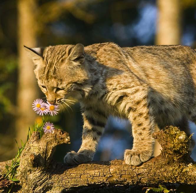 Χαριτωμένα ζώα που μυρίζουν την Άνοιξη (22)