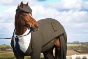 Άλογο με κουστούμι (1)