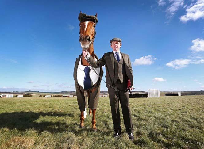 Άλογο με κουστούμι (2)