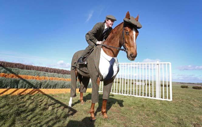 Άλογο με κουστούμι (3)