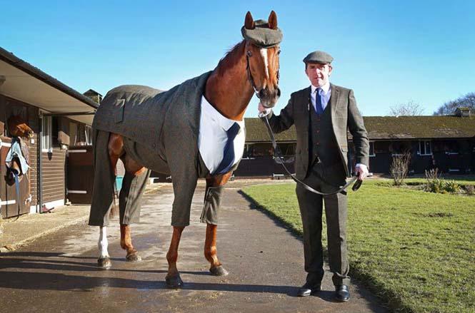 Άλογο με κουστούμι (4)