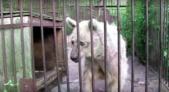 Η διάσωση και μεταμόρφωση μιας αρκούδας (1)