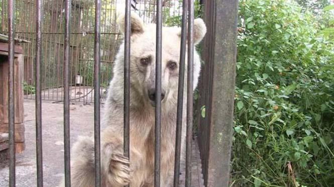 Η διάσωση και μεταμόρφωση μιας αρκούδας (2)