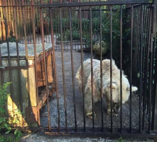 Η διάσωση και μεταμόρφωση μιας αρκούδας (3)